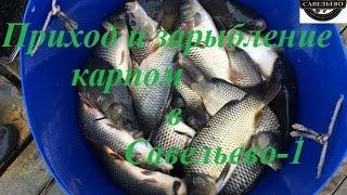 Отдых и рыбалка в Подмосковье!(Все новости вы можете смотреть в нашей группе вконтакте https://vk.com/savelevo2 Все новости с водоемов смотрите на..., 2016-08-05T06:40:42.000Z)