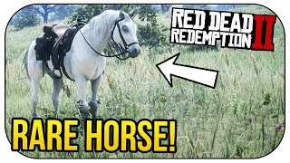 How To Get The BEST HORSE In Red Dead Redemption 2! (*FREE*) Video