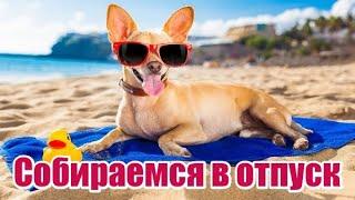 Что взять в поездку с собакой