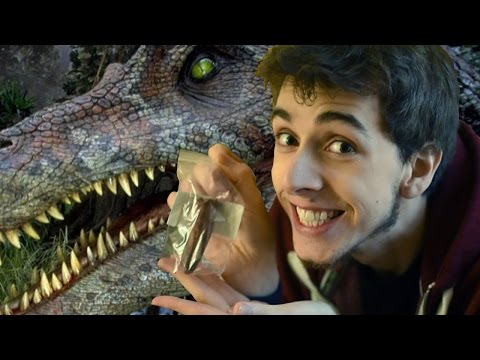 I HAVE A REAL DINOSAUR FOSSIL! - Jurassic Dreams