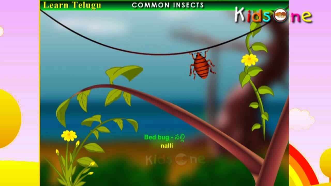Learn Telugu Learn Common Insects Names E Learning Videos For