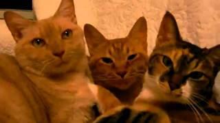 第二弾では野口家以外にその姿を見せた事のない幻のネコが登場。 その名...
