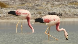 Counting Flamingos