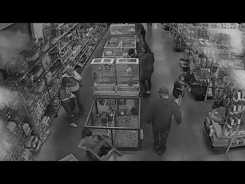 Surveillance Video Of Petland Bird Theft