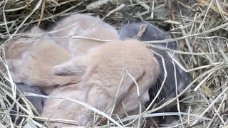 Baby Bunny Livestream 🐰