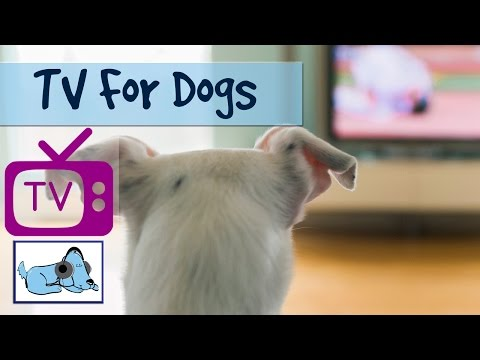 Tv For Dogs Combined with Soothing Music for Dogs - Relaxing Visuals for dogs - Calm your dog
