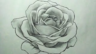 how to draw a rose | easy step by step | sketch of rose