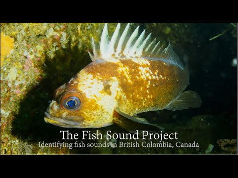 The Fish Sound Project: Unraveling The Identity Of Fish Sounds In British Columbia, Canada