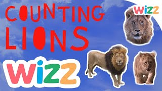 Counting Lions | Wizz Originals