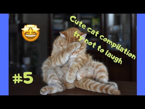 Cute cat compilation try not to laugh #5