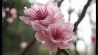 Neu Xuan Nay Vang Anh.mpg thumbnail