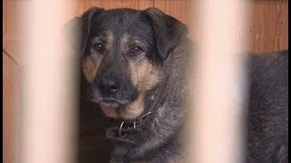 Приют для бездомных собак в «Русском алмазе»