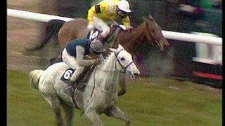 The Story of Desert Orchid