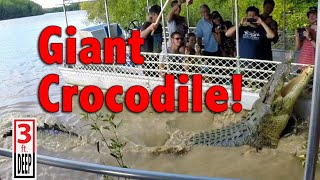 "Giant Crocodile Encounter with ""Dominator"""