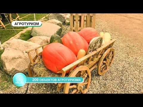 «Первый Ярославский» к выставке «Золотая осень» подготовил презентационный ролик Ярославской области