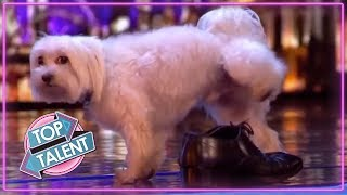 When Animal Auditions Go Wrong On Got Talent Idols And X Factor  Top Talent