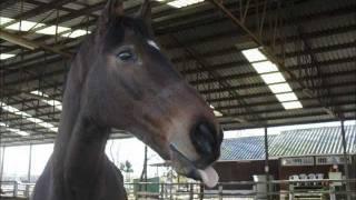 San equitación escuela jorge de