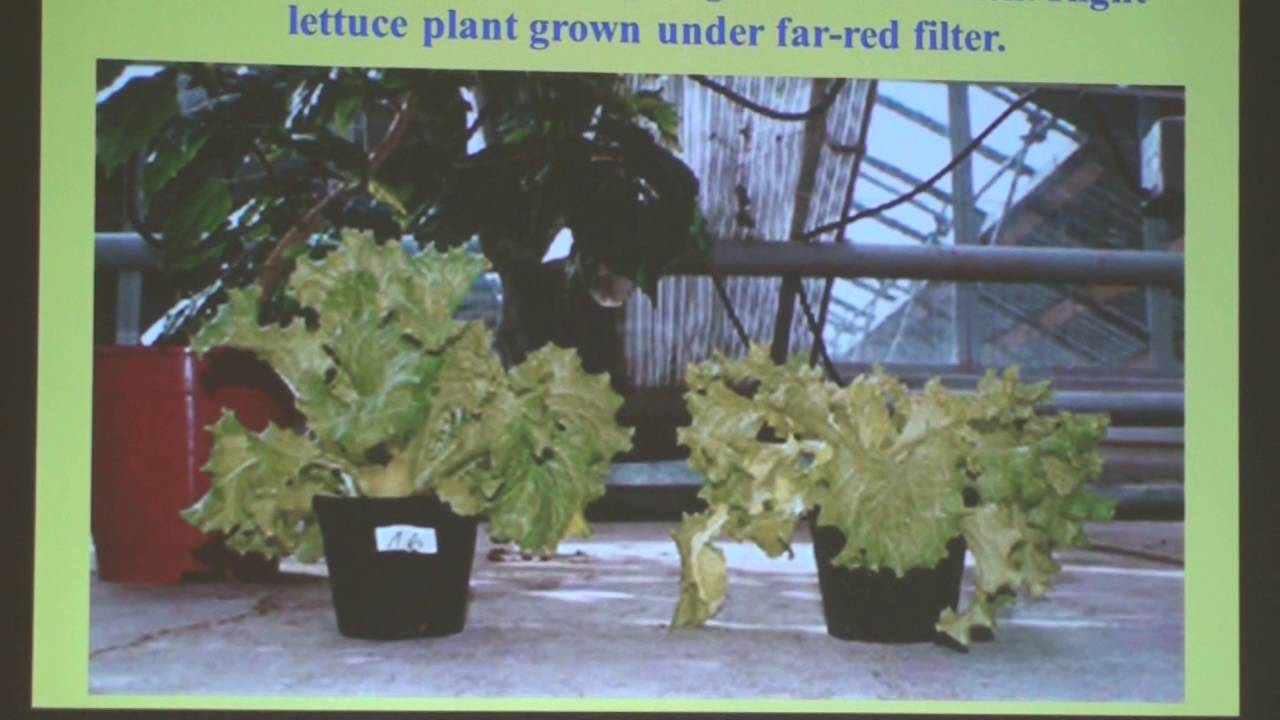 Far red filter helps to grow healthy veggies