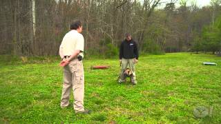Yahoo Special On Off-leash K9 Training. Dog Training, Northern Virginia