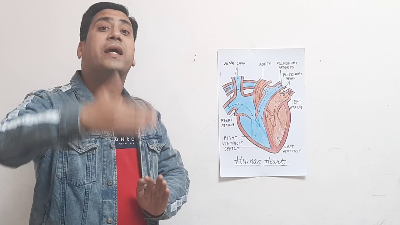 Structure and working of heart .CBSE 10 Biology .NCERT ...