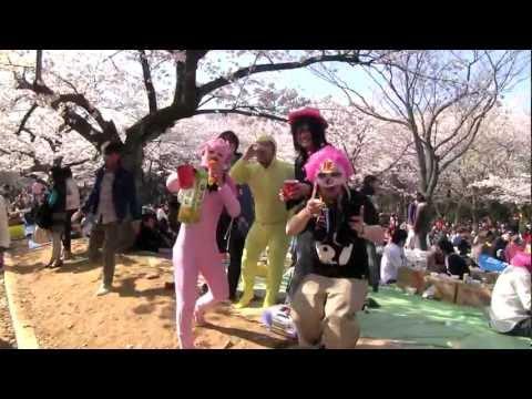 Hanami in Tokyo - Yoyogi Park Fun!