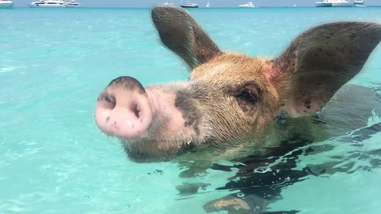 How to get to Pig Beach, Bahamas - 7 Continents 1 Passport