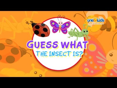 Guess What The Insect Is? Zaky Game