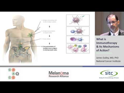 What is Immunotherapy & Its Mechanisms of Action?