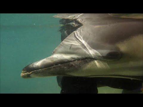 Download Rescate delfín atrapado en un palangre.