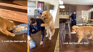 Golden Retriever Is Afraid Of Mop..Human Brother Comes To His Rescue