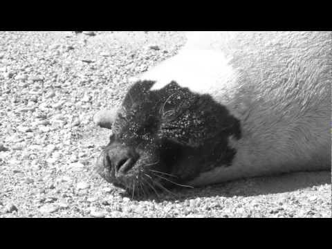 Mystic Aquarium Animal Rescue
