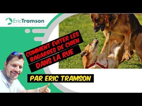 COMMENT EVITER LES BAGARRES DE CHIEN DANS LA RUE PAR ÉDUCATEUR CANIN (1)/ERIC TRAMSON