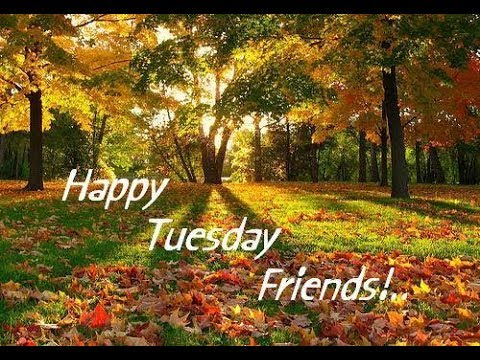 Happy Tuesday Greetings,Quotes,Sms,Wishes,Saying,E Card,Wallpapers,Happy  Tuesday Whatsapp Video