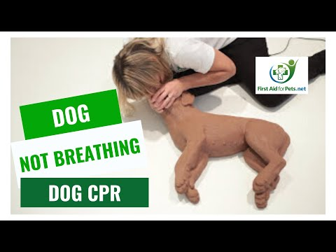 Dog CPR - How to resuscitate your pet