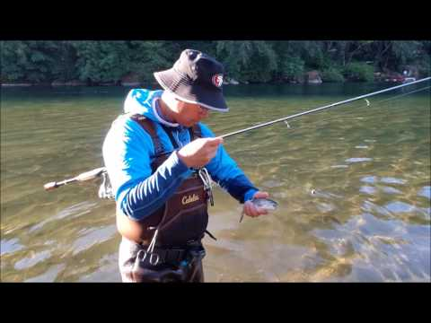 Powerbait Setup For Trout Fishing
