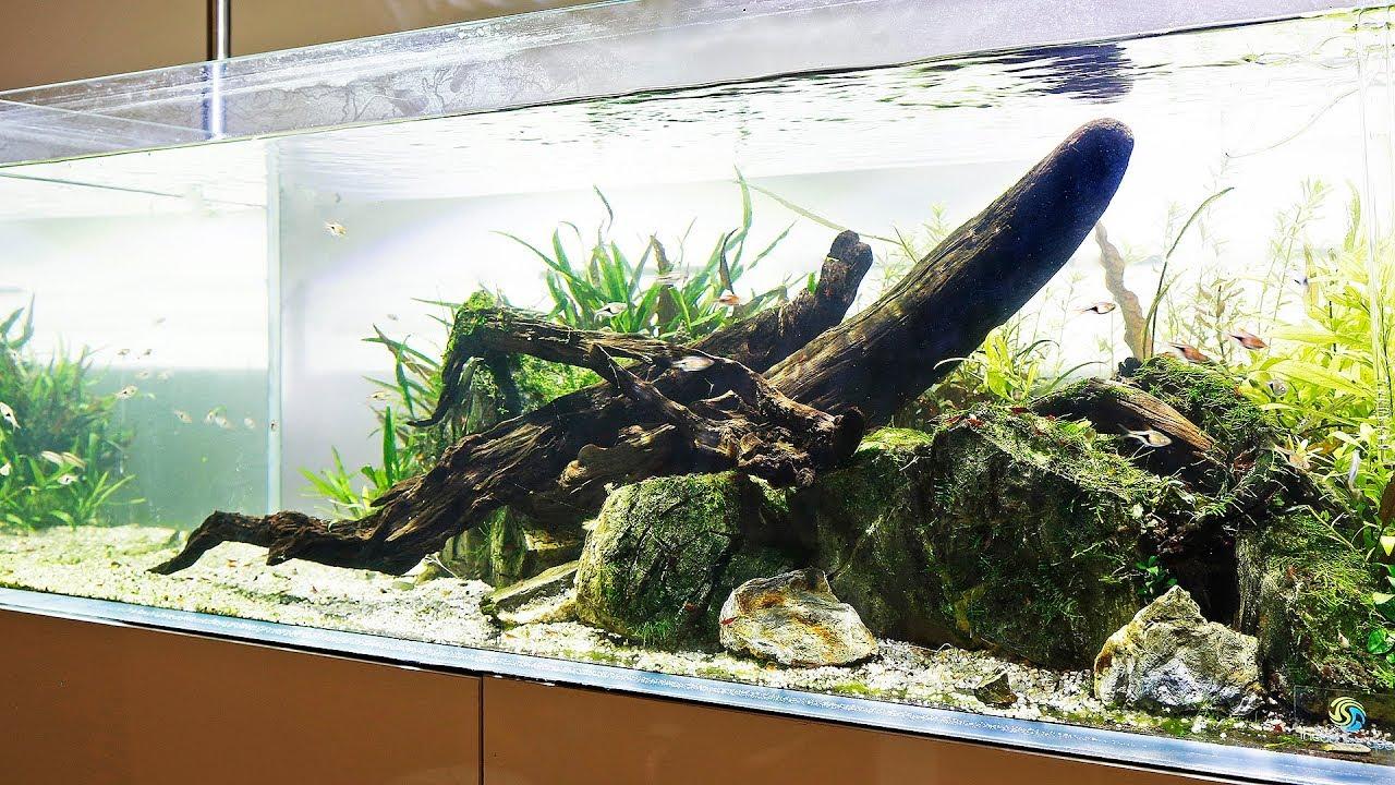 Best Malawi Cichlid Aquascape 6500g Planted Tank News Youtube