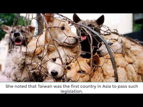 Taiwan becomes first country in Asia to ban eating of cat and dog meat ll 720p HD
