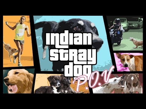 A Day in the Life of an Indian Stray Dog - Take 900 POV