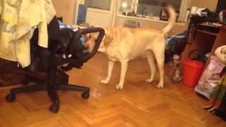 Паук и собака прикол