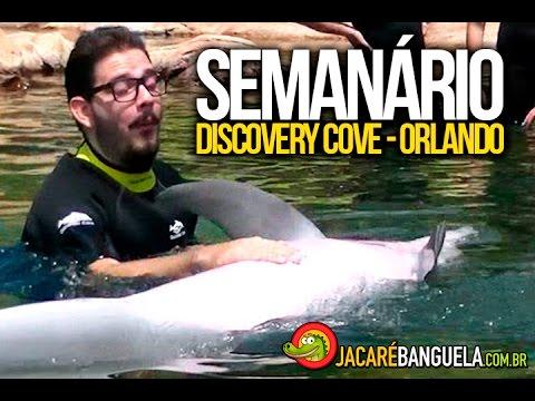 SEMANÁRIO - ORLANDO - DISCOVERY COVE