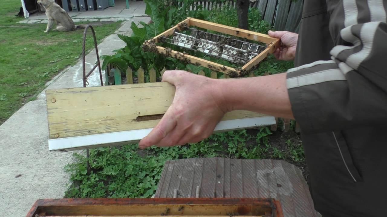 Как сделать пчел добрыми 321