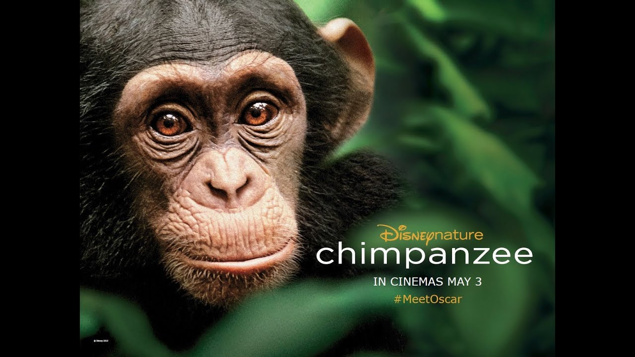 Free Hd Cute Baby Wallpaper Chimpanzee Uk Trailer Official Disney Hd Youtube