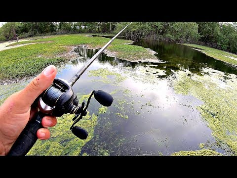 Bass Fishing Texas Grass for GIANTS!! (LOADED)