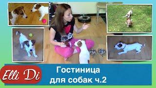 видео Гостиница для домашних животных только в Москве и только для Вас