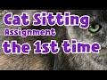 I Got a Cat Sitting Request