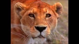 World Animal Adventure, Part 3 | Animal Videos for Kids | Baby Einstein