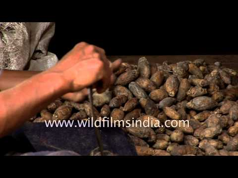 Learn how to peel areca nuts