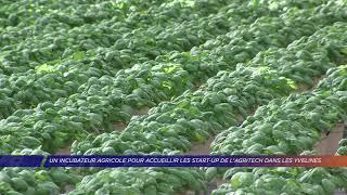Yvelines | Un incubateur agricole pour accueillir les start-up de l'agritech dans les Yvelines