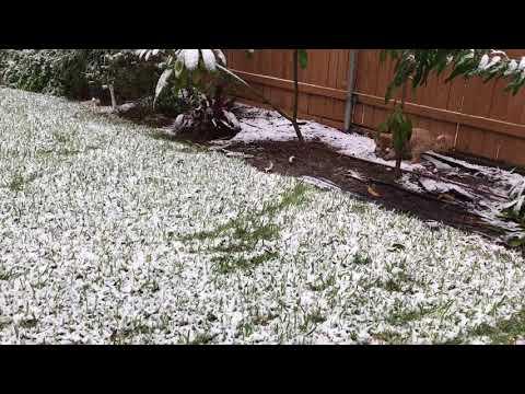 Snow in McAllen, Texas!