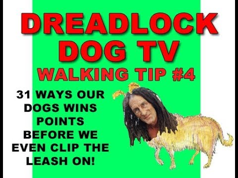 Walking Tip #4 31 Ways Our Dogs Wins Points Before We Even Clip the Leash On!